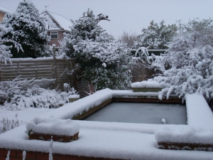 Garden snow small