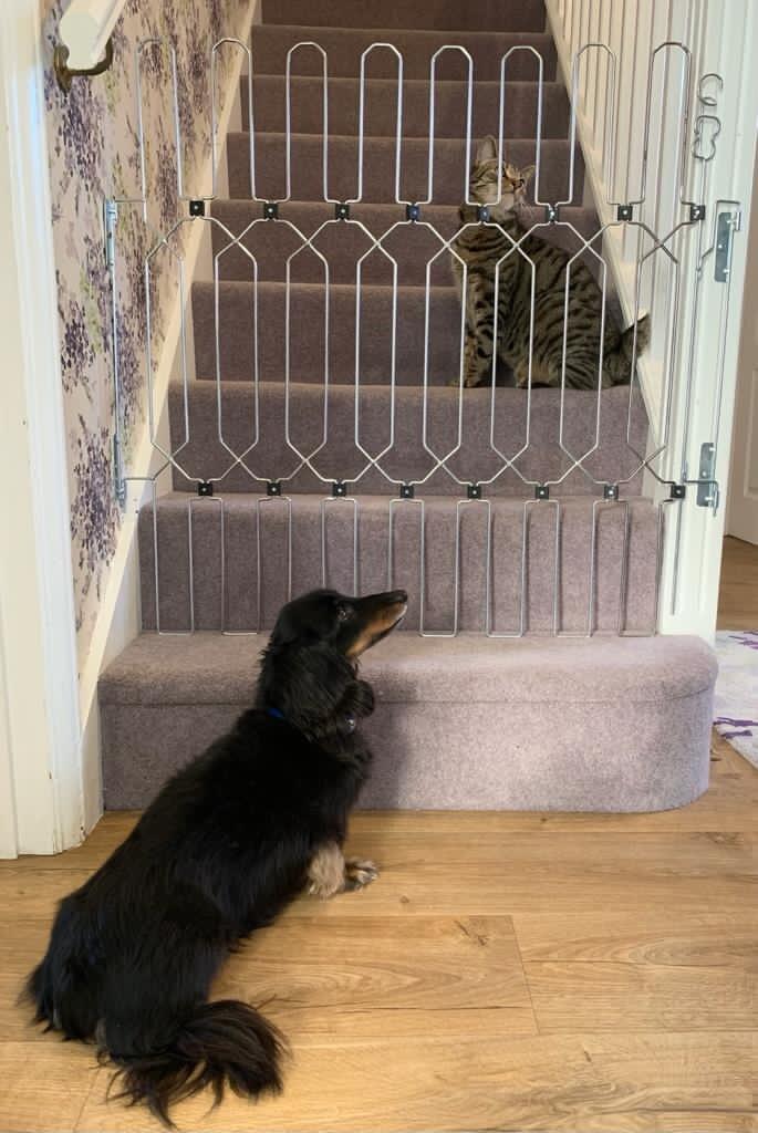 DOG GATE DOG AN CAT.jpg